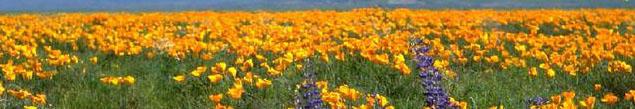 Yellowfield